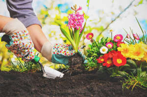 gardening may decrease your anxiety and depression