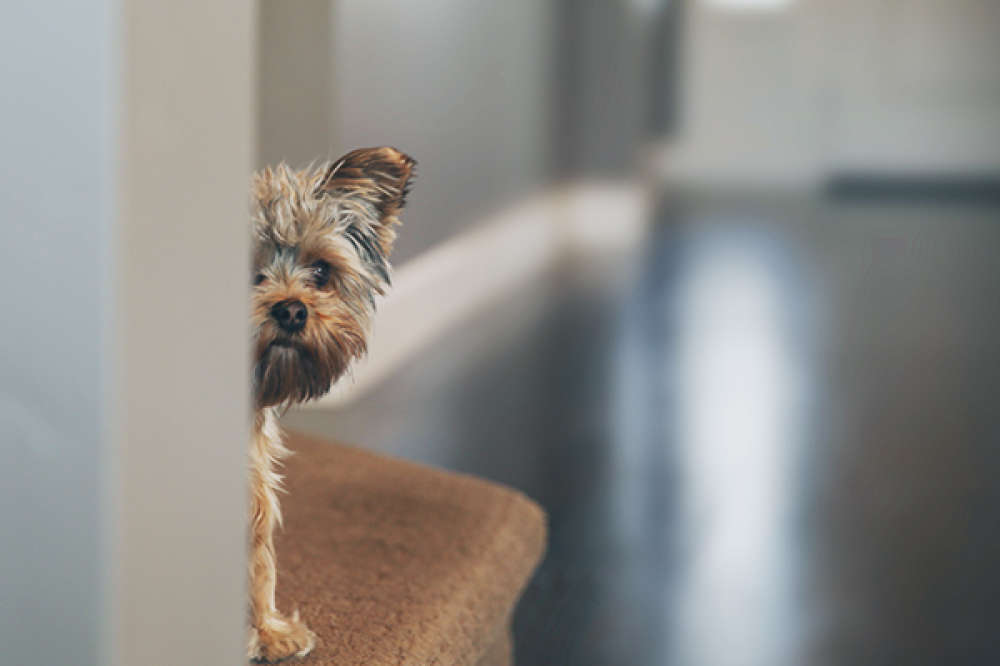 Dog Breeds Prone To Ocd