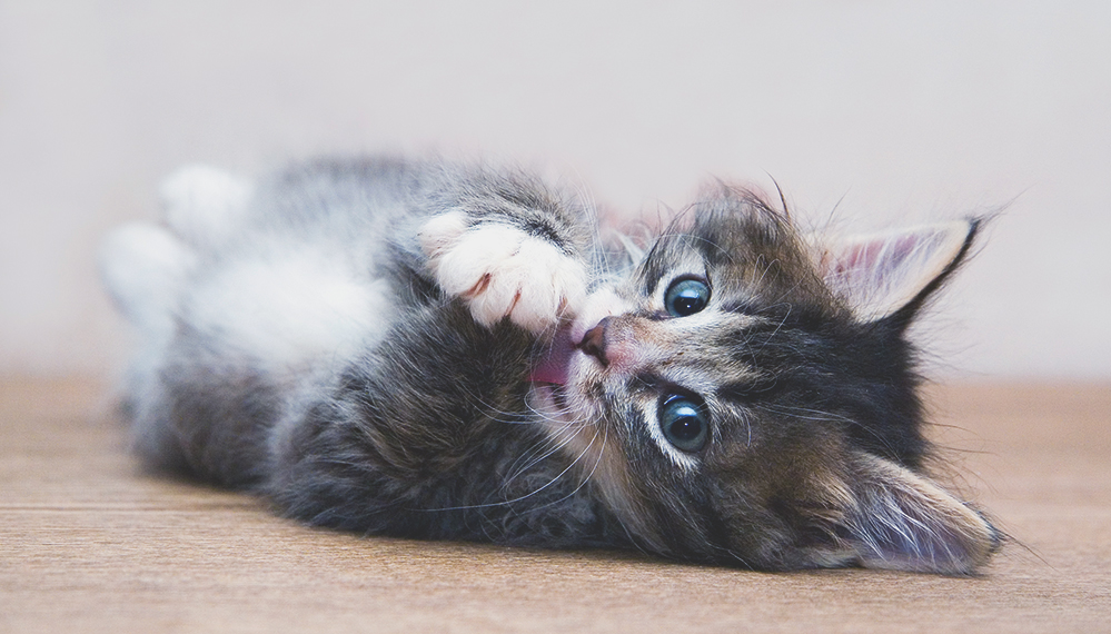 Health Problems You Can Get From Your Pet: Cats